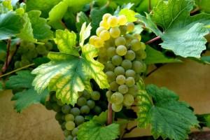 wine-63931_640